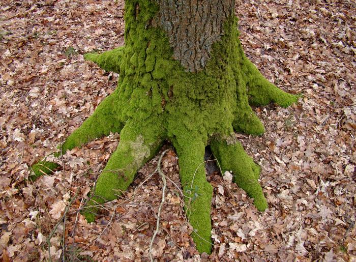 Groene tenen