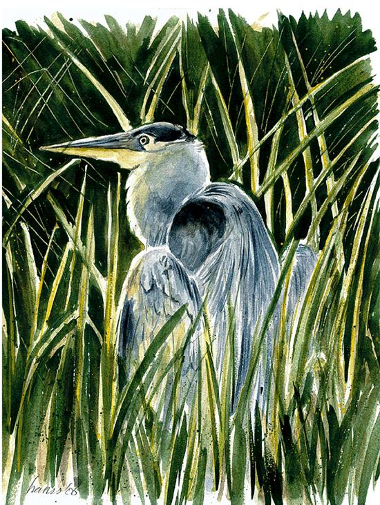 Blauwe reiger (aquarel)