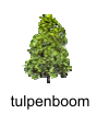 tulpenboom
