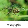 wespspinklein