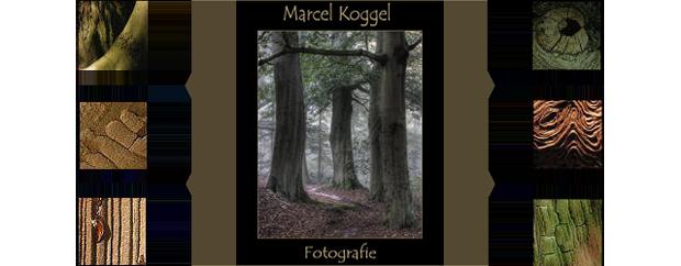 IMG_marcel