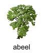 abeel
