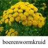 IMG_boerenwormkruidklein