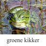 groene-kikker-klein