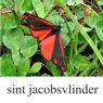 jacobsvlinder-klein