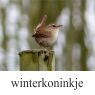 winterkoninkjeklein
